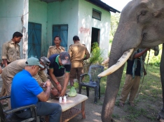 Orang National Park elephant health clinic
