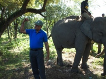Dr. K.K. Sarma, Forest Department elephant health clinic