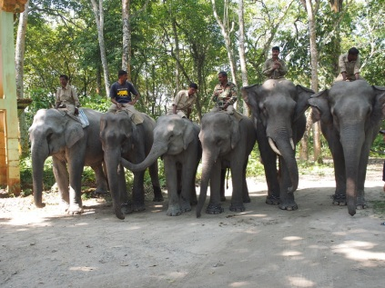 FOrest Department mahouts and their elephants